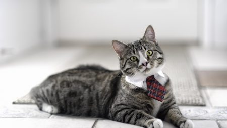 cat, cute, tie