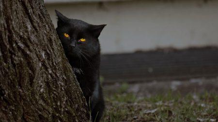 cat, dark, wood