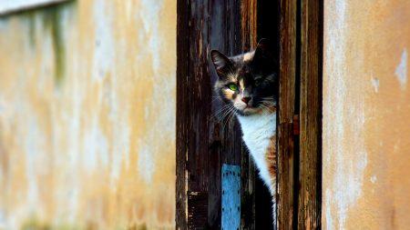 cat, door, looking out