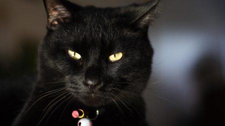 cat, eyes, face