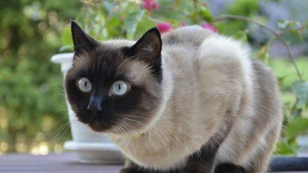 cat, eyes, fear