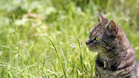cat, face, grass