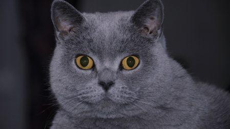 cat, face, hair