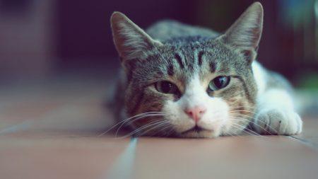 cat, face, rest