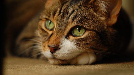 cat, face, sadness