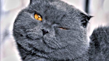 cat, face, squinting