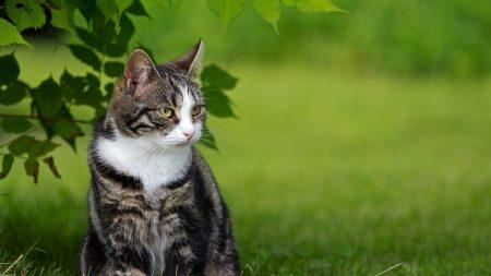 cat, fat, grass