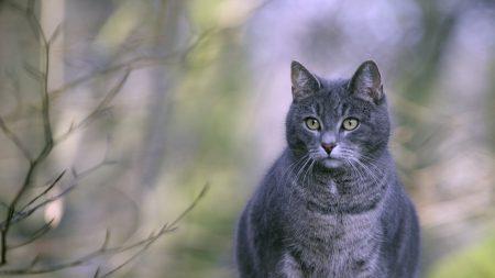cat, fat, lying