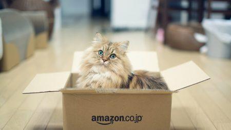 cat, fluffy, box