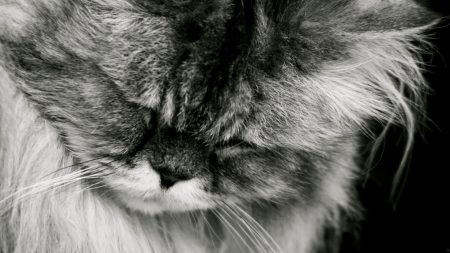 cat, fluffy, muzzle