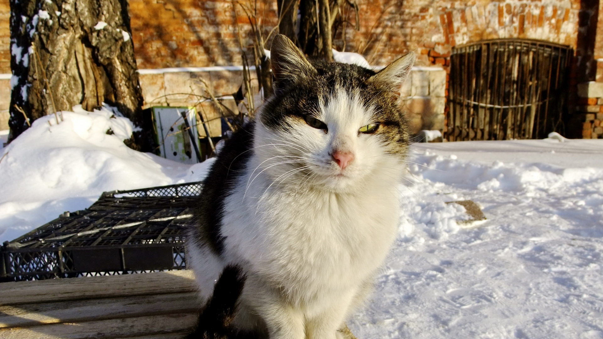 Earnings Disclaimer >> Download Wallpaper 1920x1080 cat, furry, homeless, snow ...