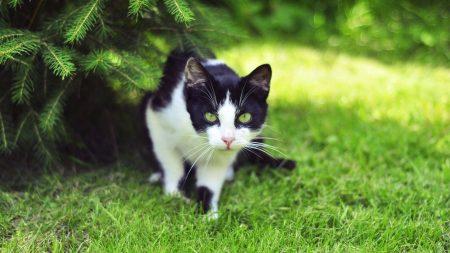 cat, grass, climbing