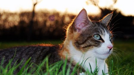 cat, grass, eyes