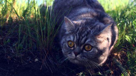 cat, grass, fear