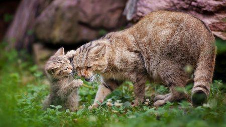 cat, grass, kitten