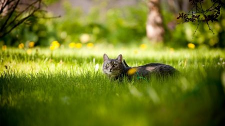 cat, grass, lie down
