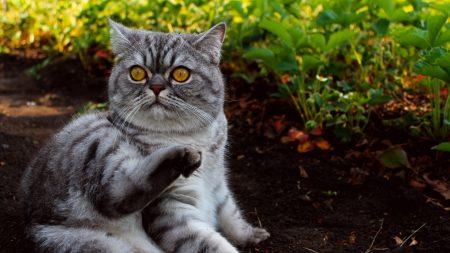 cat, grass, lying