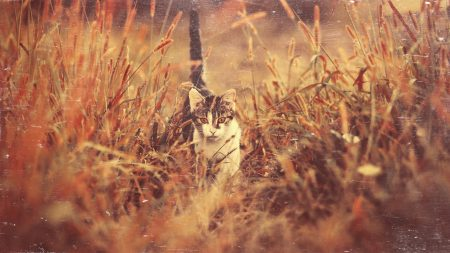 cat, grass, nature