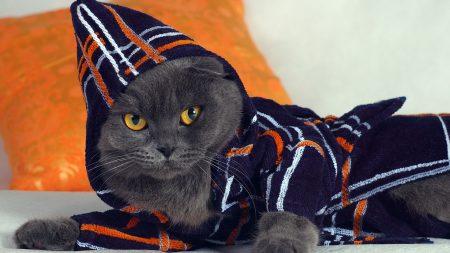 cat, hood, fashion