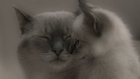 cat, kitten, caring