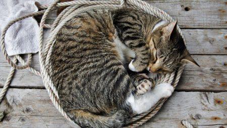 cat, kitten, lie