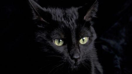 cat, kitten, muzzle