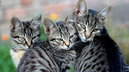 cat, kittens, look
