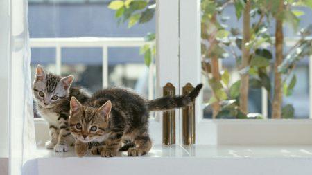 cat, kittens, play