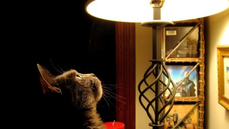cat, lamp, curiosity