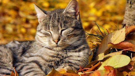 cat, leaves, lie down