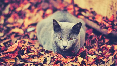 cat, leaves, sit