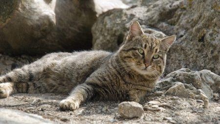 cat, lie, light