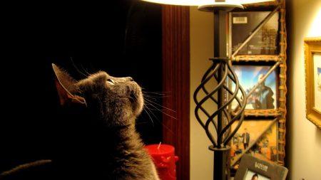 cat, light, look