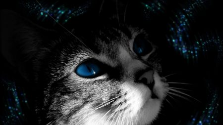 cat, muzzle, black white