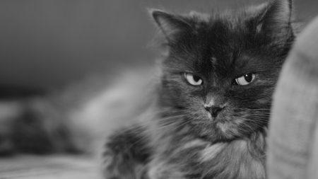 cat, muzzle, bushy