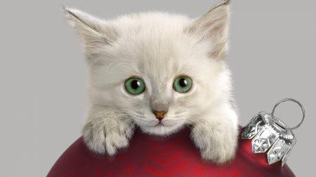cat, muzzle, christmas decorations
