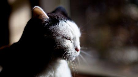 cat, muzzle, shadow