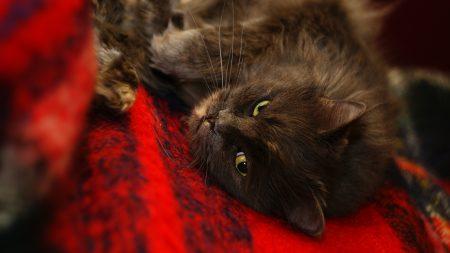 cat, muzzle, sleep