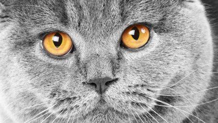cat, muzzle, waiting