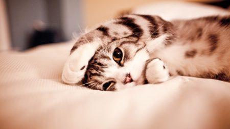 cat, paw, lie down