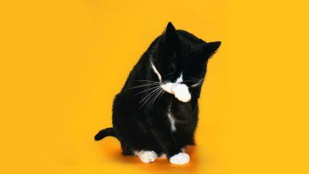 cat, paw, snout