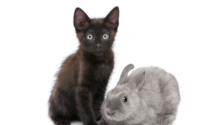 cat, rabbit, couple