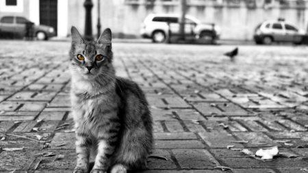 cat, road, city