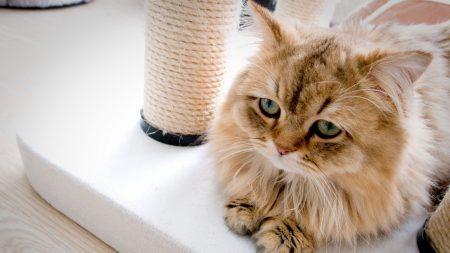 cat, sadness, fluffy