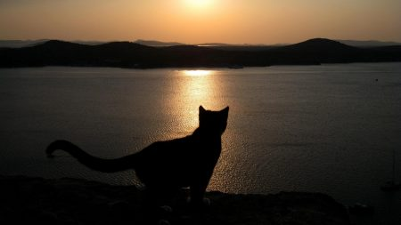 cat, sea, shadow
