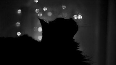 cat, shadow, highlights