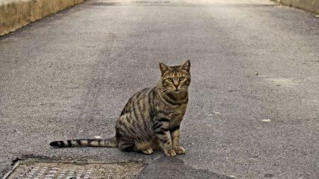 cat, sidewalk, sitting