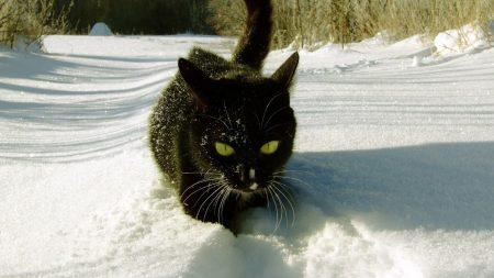 cat, snow, climbing