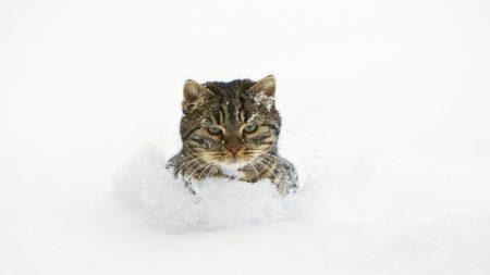 cat, snow, face