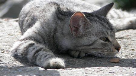 cat, striped, pretty